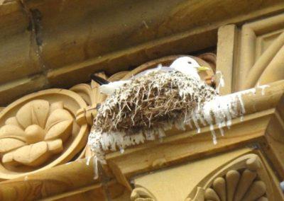 Výškové instalace zábran proti ptactvu 06