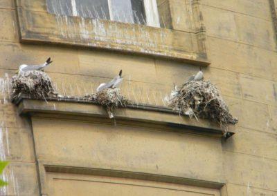Výškové instalace zábran proti ptactvu 08