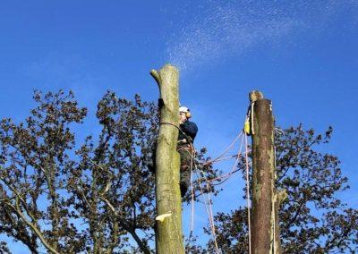 Výškové kácení stromů 03