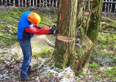 Výškové kácení stromů 04