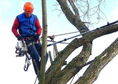 Výškové kácení stromů 05
