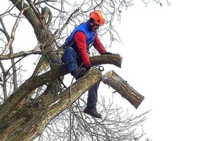 Výškové kácení stromů 07